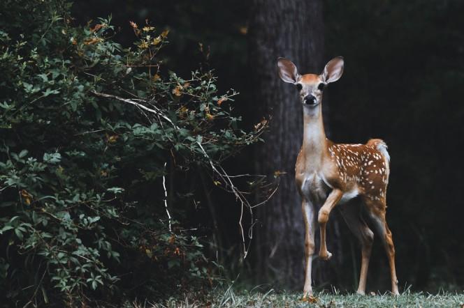 Rewilding the Nation
