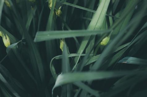 Viva la Wild Garlic!!