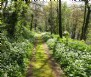 Carnanton Woods, St Mawgan