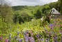 Explore scents and delicate colours in the lost flower fields at Tamar Valley