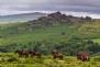 Venture onto Dartmoor on horseback with Liberty Trails