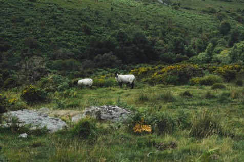 Teign Valley Spy Trail