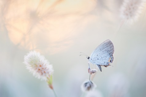 Botany and Butterflies