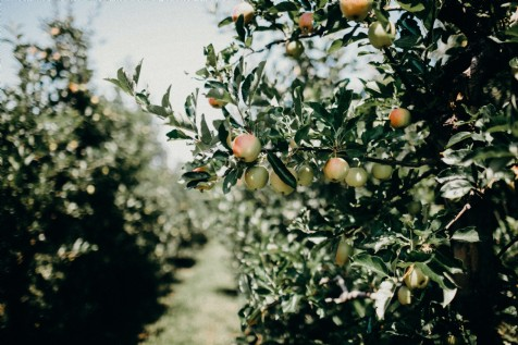 Local Cider Producers