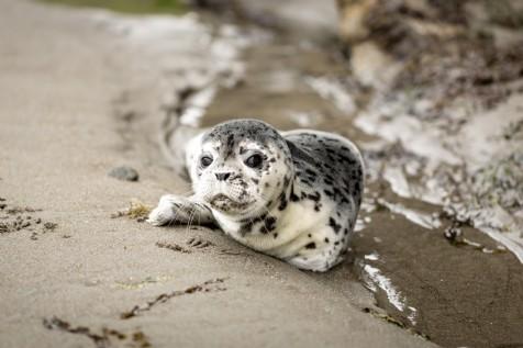 Seal Watching at Horsey