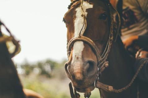 Pevlings Farm Riding Stables