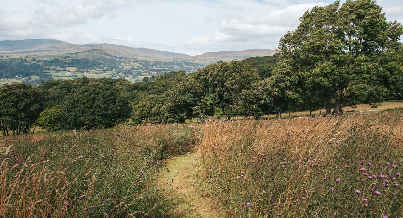 Hinterland Cabin | Self-Catering Accommodation in Wales
