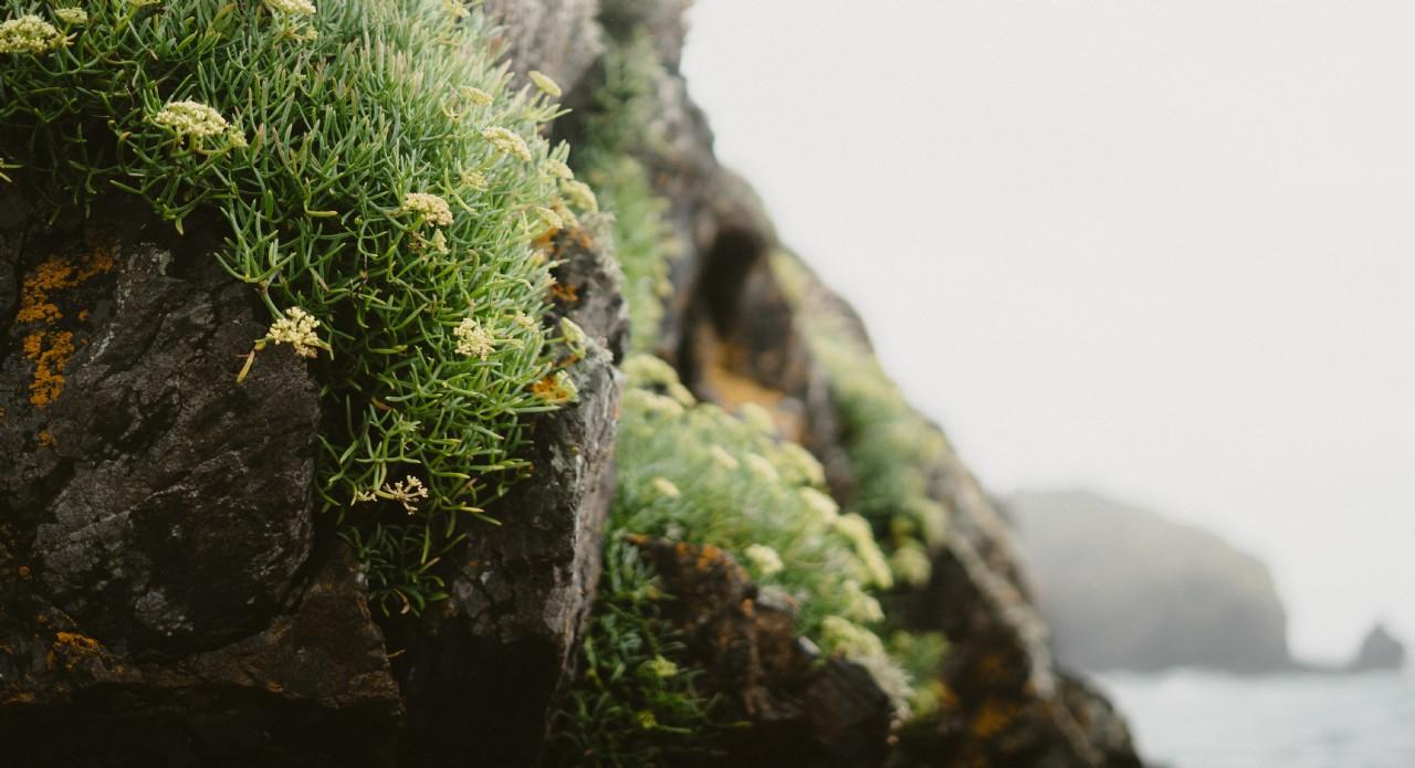 Wild Flowers on a Cliff Edge | Coastal Escapes