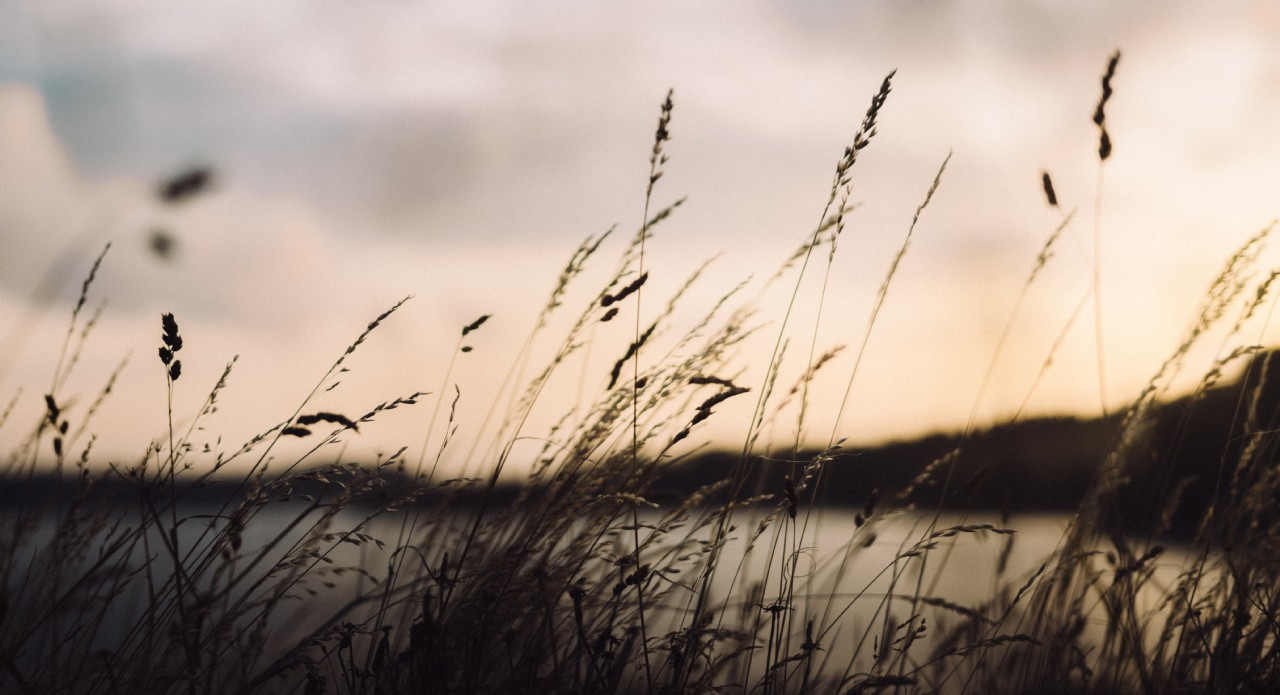Wild Coast Path Walks | Coastal Retreats