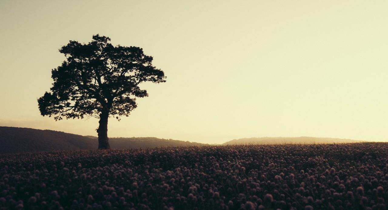 Rural Dusk Landscape with Tree | Wilderness Retreats