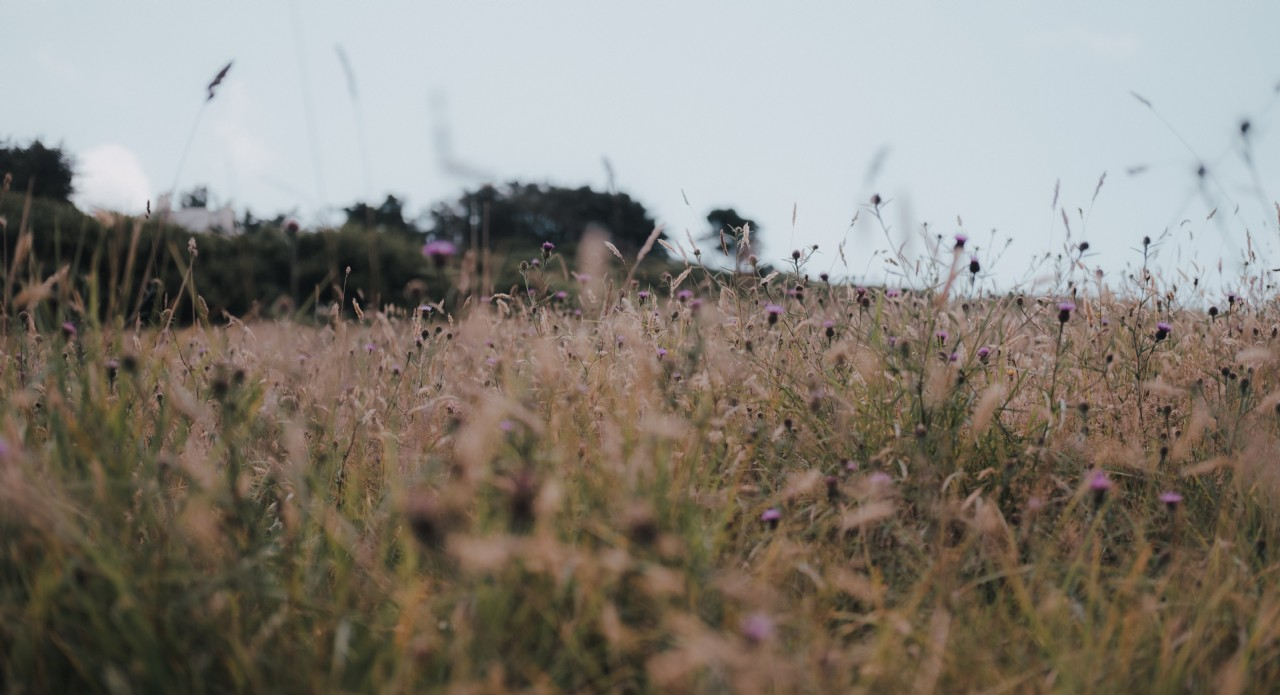 Wild Flower Meadow | Wilderness Retreats