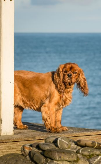 Dog-friendly holiday homes with sea views