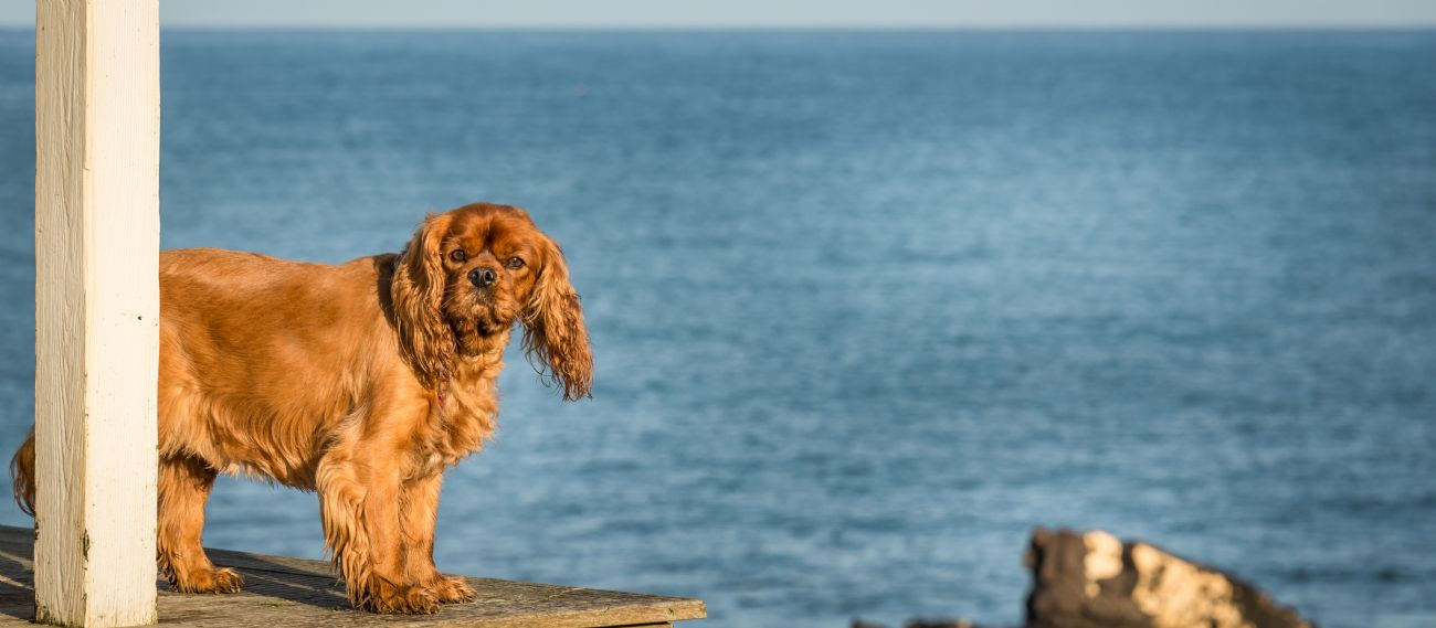 Dog Friendly Coastal Cottages By The Sea Cornwall To Scotland